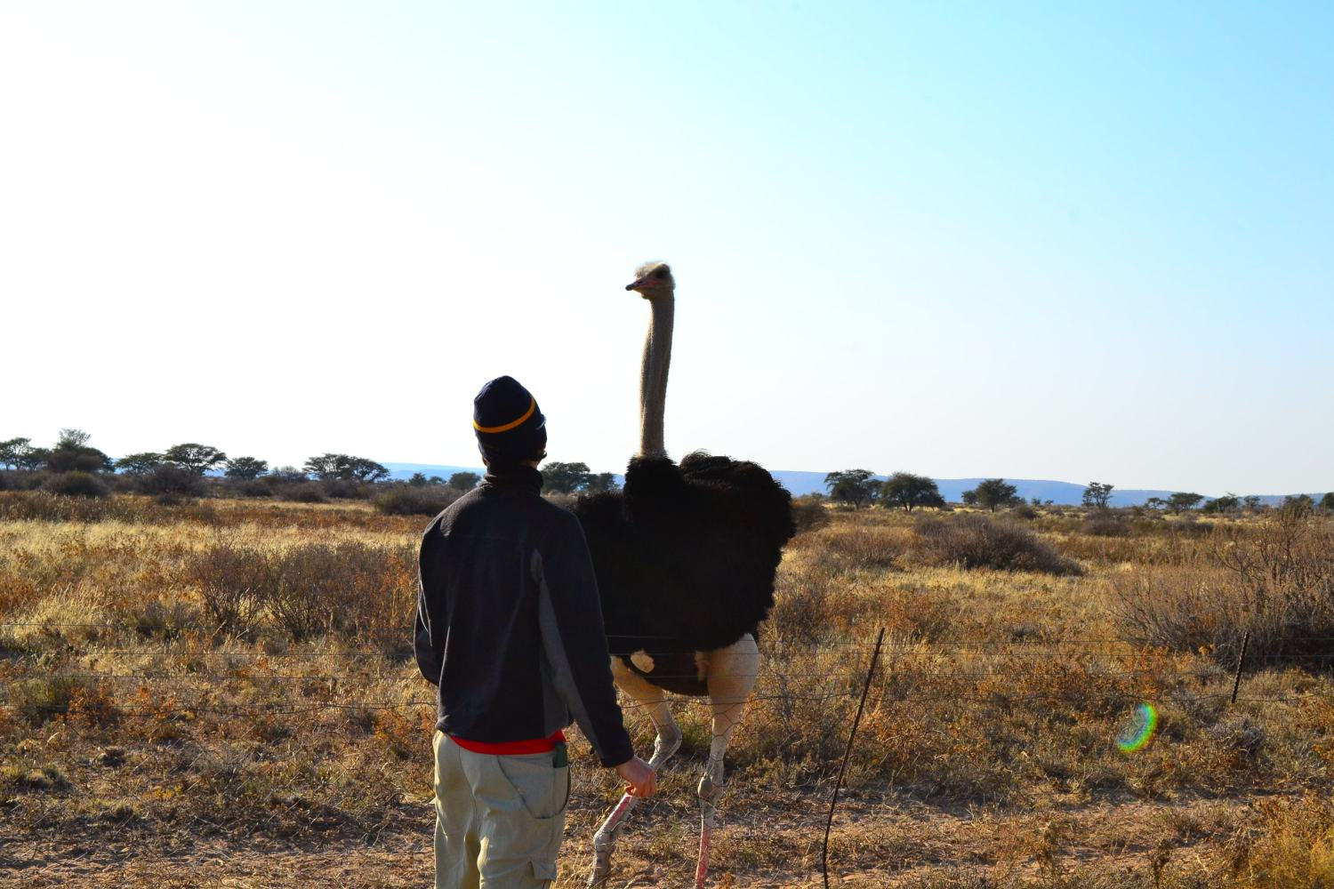 Gavin and Ostrich