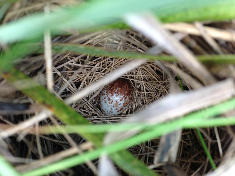 5 SESP Nest