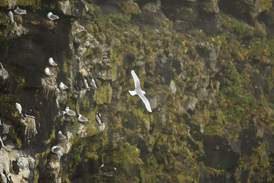 cliffs_resize